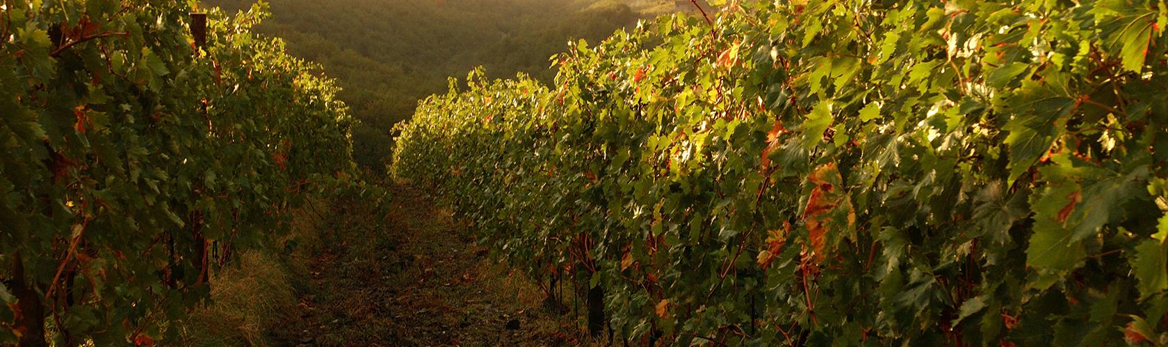 100 pontos da Wine Enthusiast para o Brunello di Montalcino Riserva 2012 de Andrea Costanti