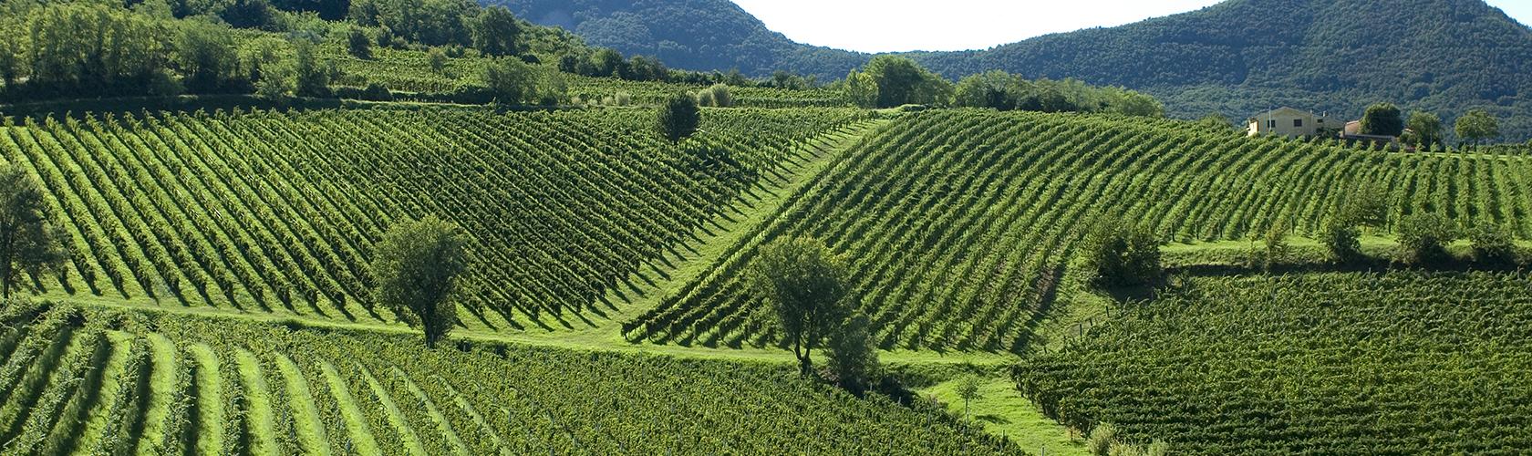 Barbaresco 2015 de Gaja: com 95 pontos é um dos hot wines da Wine Spectator