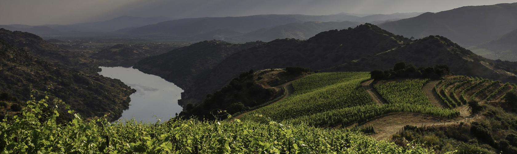 Quinta do Vale Meão<br>O melhor vinho de Portugal