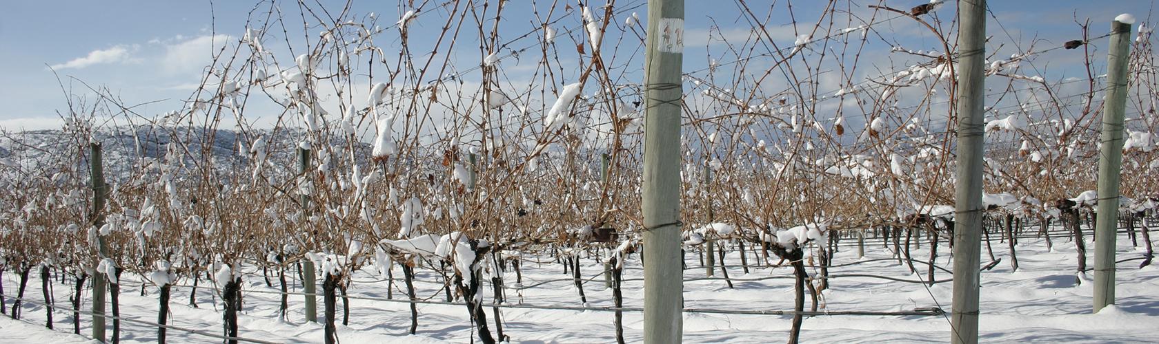 Como a região e o clima de produção interferem no vinho?