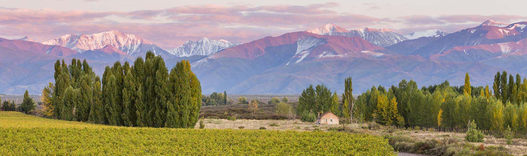 Como escolher um vinho argentino?
